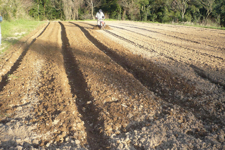 開墾し、畑らしくなってきました